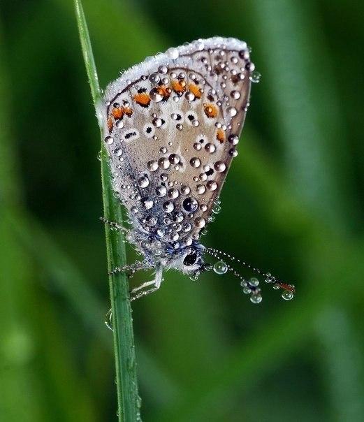 бабочка в каплях