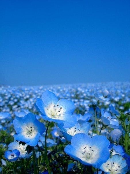 Небесная красота