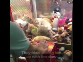 Viral trnd - cat takes nap in claw machine at arcade