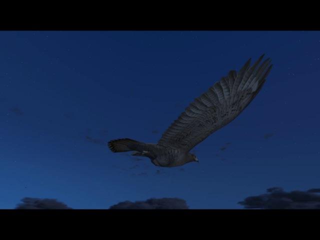 9-я Лофофора (Ястреб) Играем за животных GTA 5