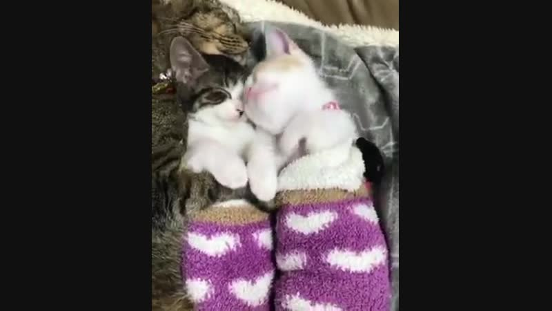 2 kittens adopted by 3 cats who taught them how to cuddle ) (courtesy midorinotanbo)