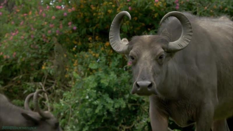 В дебрях Индии Фильм 4 Западные Гаты Муссонные горы 2011г