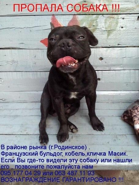 Пропала собака Донецкая область, село Родинское.
