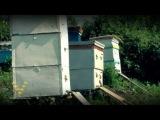 Видеокурс. Пчеловодство.