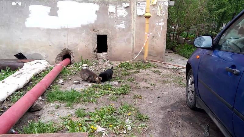 Кошки которые будут стерилизованы и ищут дом