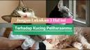 5 Hal Terlarang ini Yang Tidak Boleh Dilakukan Ke Kucing