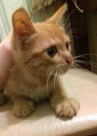 Котенок ищет дом! 3-4 месяца.  К лотку и миске приучен.  Скромный и лю