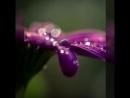 Магия цвета Волшебный фиолетовый