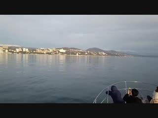 Дельфины в Черном море! <3