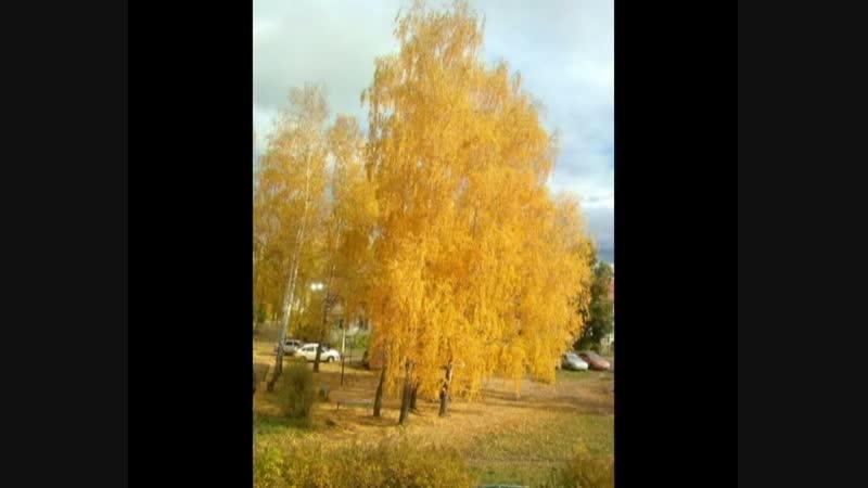 Дерево за окном. Елабуга, ул. Матросова.