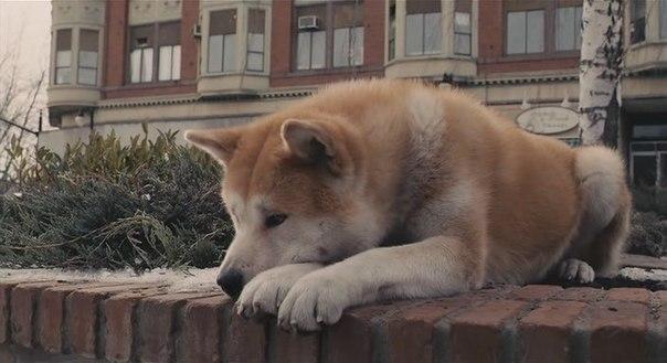 Он не умер.  Он просто ушел... здесь телефоны молчат так громко (с). Хатико застрелился от одиночества.