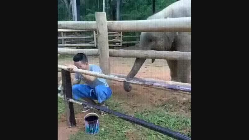 слоник помошник