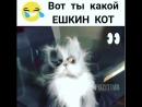 Astonished rolling on the floor laughing smiley cat ПОДПИСАТЬСЯ point right @sreda pozitiva кот ешкинкот котяра