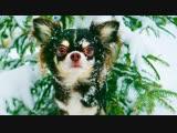 [Magic Pets] ПИТОМЦЫ В ПОИСКАХ ЁЛКИ! ПЕРВЫЙ СНЕГ ЗИМА ГЛАЗАМИ СОБАКИ СНЕЖНЫЙ ЧЕЛЛЕНДЖ