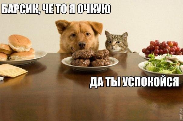 http://cs543109.vk.me/v543109008/5140/FZmesx4SJS4.jpg