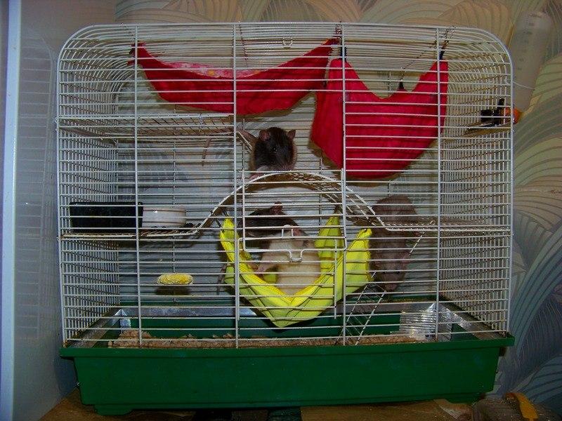 Гамак для крысы в клетку как сделать