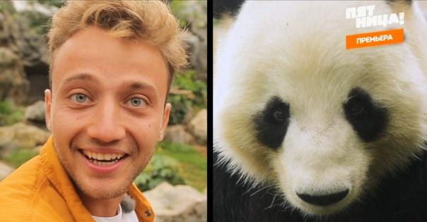 «Орёл и решка» побывали в Гонконге: екатеринбуржец покатался на Tesla и впервые увидел панд