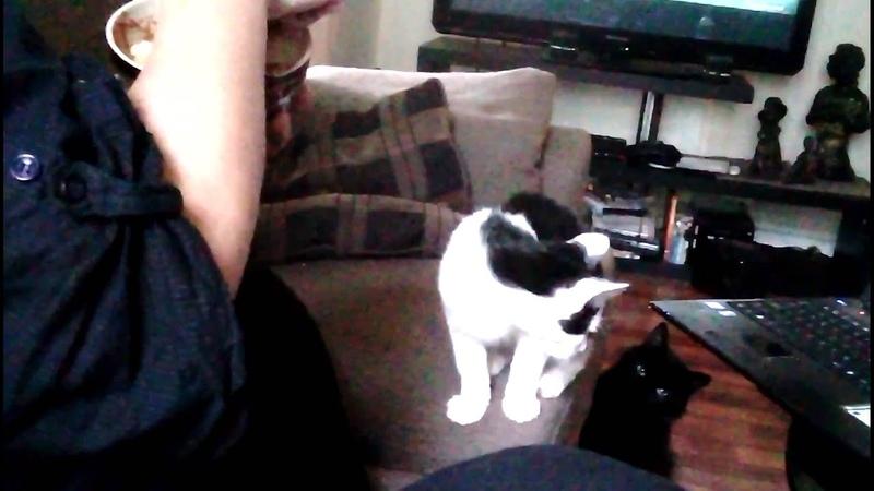 Funny kittycat eats
