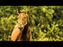 Лошади самые умные и преданные животные Horses are the most intelligent and loyal animals