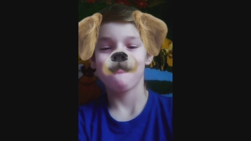 Собака чёкнулась