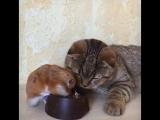Как такое может быть? Чтобы еда ела мою еду? Спокойный котик. Он просто смотрит и молчит.