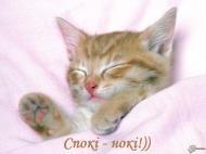 кот,котенок,спокойной ночи,приятных снов.другу,подруге,красиво,сладких снов,пожелание,пожелания,ночь,животные