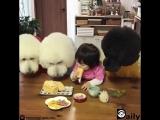 Завтрак с лучшими друзьями