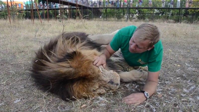 Лев обнимает человека