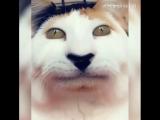 Snap filter cat