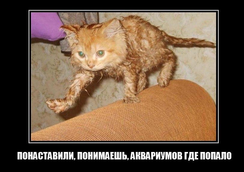 Мобогений скачать на андроид трешбокс Руменов