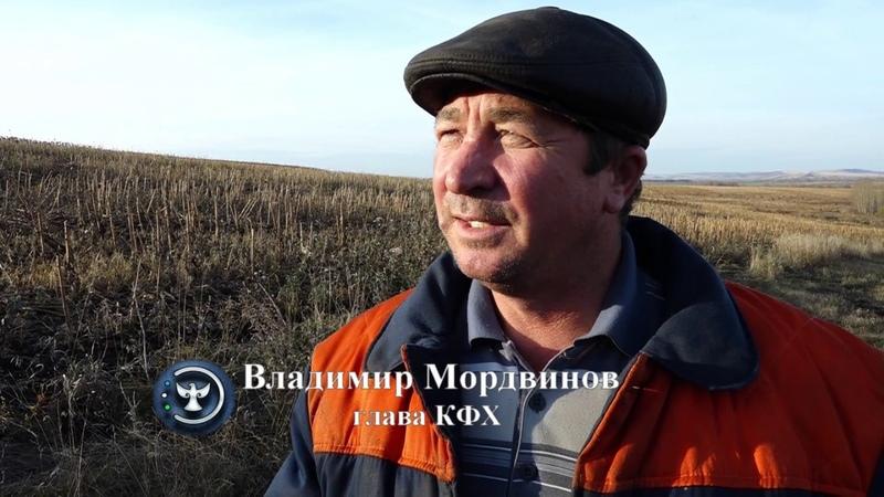 Небывалый урожай. КФХ Мордвинов. Кугарчинский район.