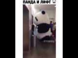 Панда и лифт