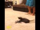 когда боишься пауков