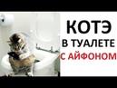 Лютые приколы Кот в туалете с айфоном