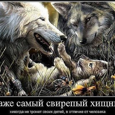 Руслан Вовк, 21 июля 1987, Львов, id190703066