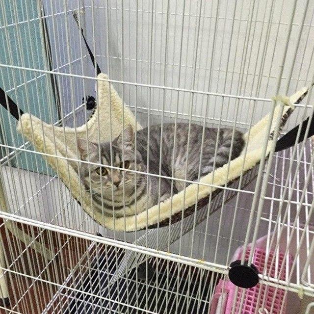 Гамак для кота 315