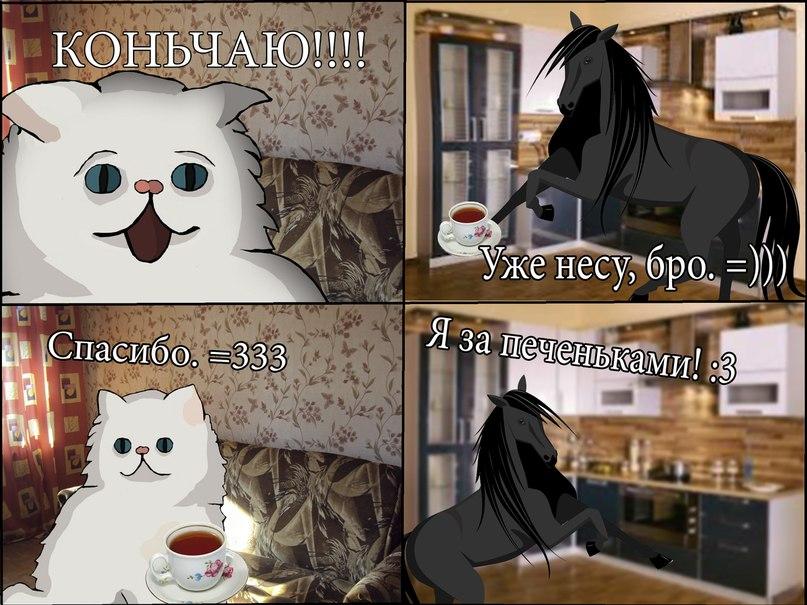 С кошками конь пиченьки чаепитие / Смешные картинки, приколы, видео,
