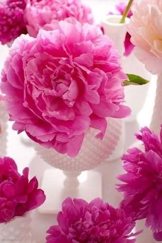 цветы -они прекрасны