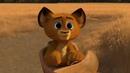 Кот который возомнил себе Алексом. (Мадагаскар)