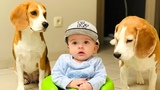 How is Life with Dogs and A Baby First 4 Months Compilation Funny Dogs Louie and Marie