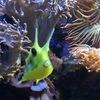 Выставка морских и пресноводных аквариумов