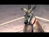 ЦИРК 60 секунд жесточайшей дрессировки в мире PETA+ВИТА