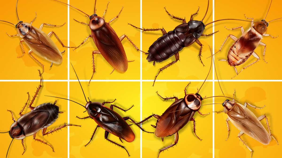 Что такое таракан? Как выглядит таракан
