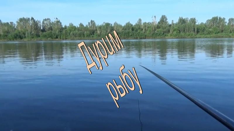 Хочешь рыбы бочку Лови на поплавочку