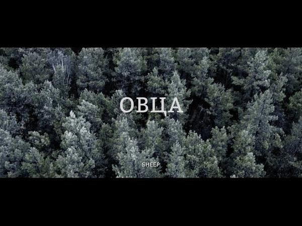 Короткометражный фильм ОВЦА
