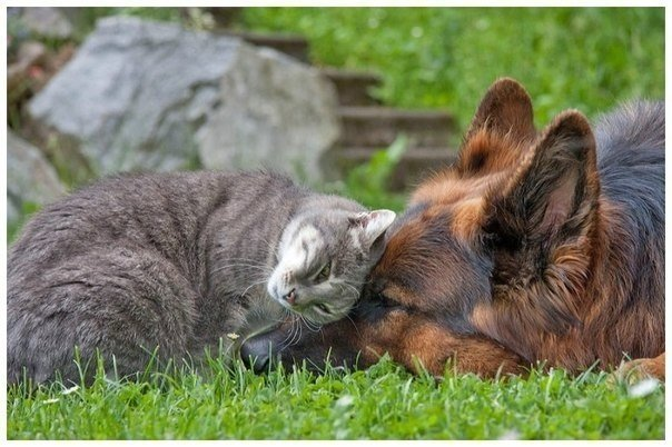 Кошки и прочие забавные животные  - Страница 3 WpuCZxob-yc
