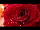 ЭТИ РОЗЫ ДЛЯ ТЕБЯ красивая песня о любви.wmv