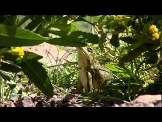 BBC Мир природы Бабочки