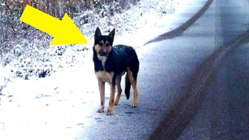 Dieser Hund wartete 4 Wochen verzweifelt auf die Rückkehr seines Besitzers