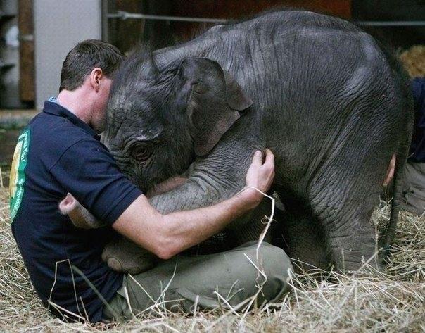 გინახავთ ასეთი რამ სპილოზე?